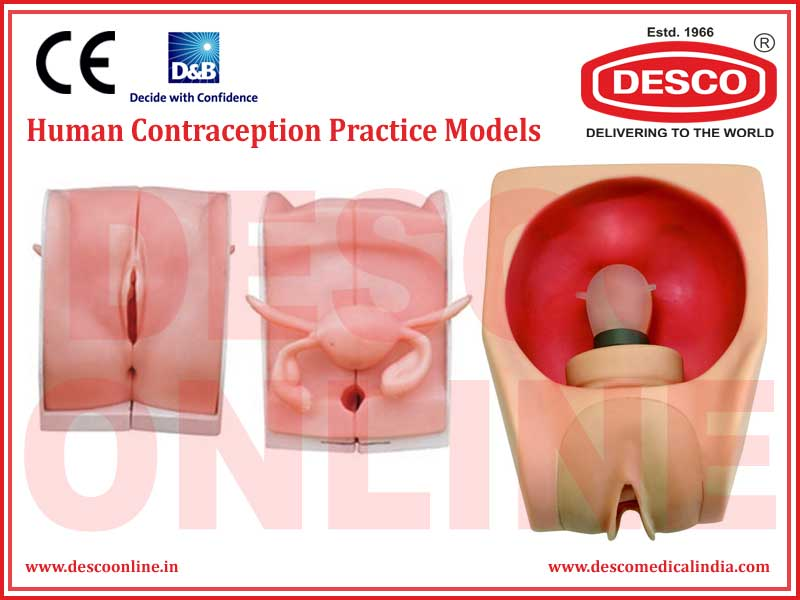 HUMAN CONTRACEPTION PRACTICE MODELS
