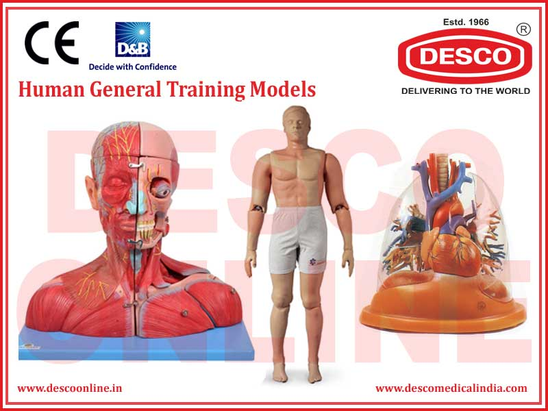 HUMAN GENERAL TRAINING MODELS