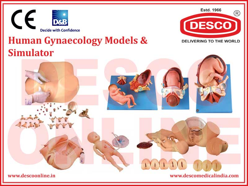 HUMAN GYNAECOLOGY MODELS & SIMULATOR