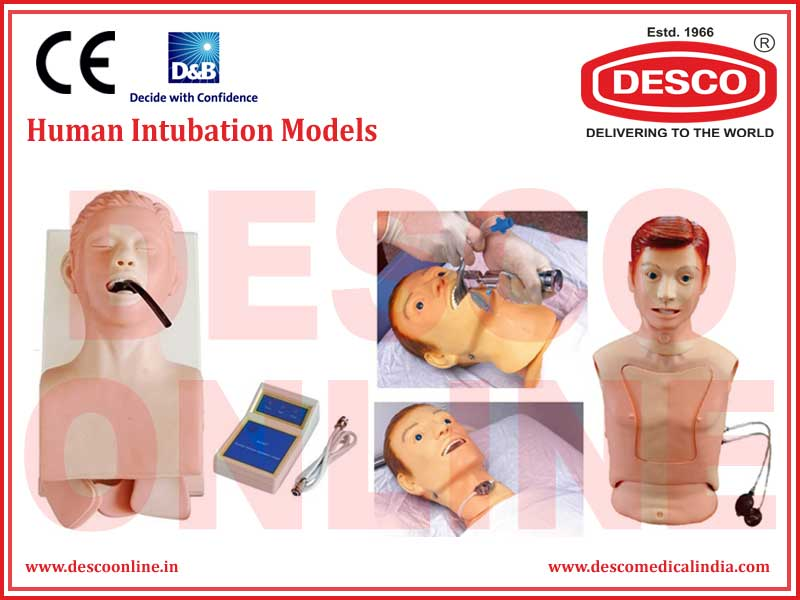 HUMAN INTUBATION MODELS
