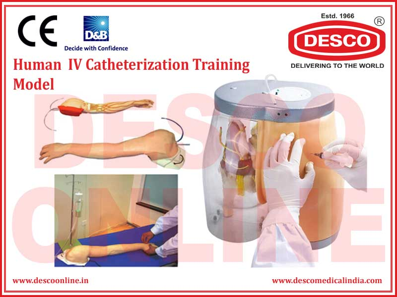 HUMAN  IV CATHETERIZATION TRAINING MODEL