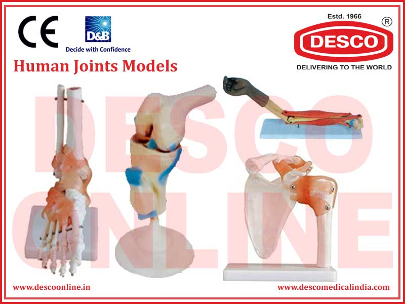 HUMAN JOINTS MODELS